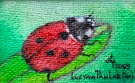 Obraz olejny: Lucyna Pawlak (Lu) - Biedronka